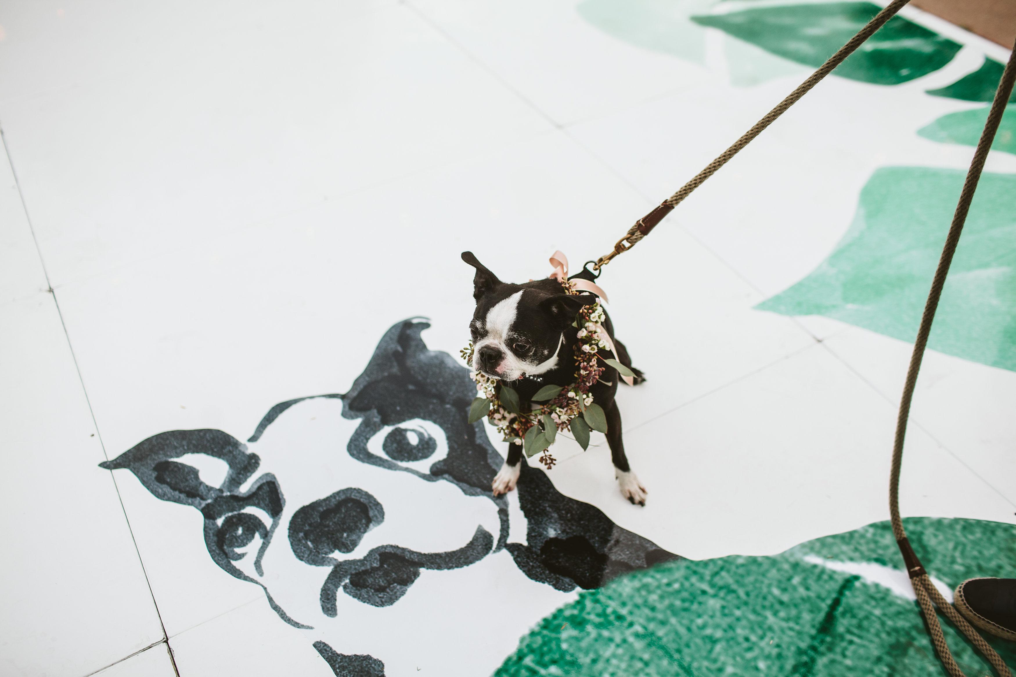 Dog and Dog Portrait