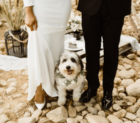 Including Your Pet in Your Wedding Day