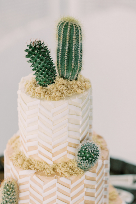 Small Cacti on Textured Cake