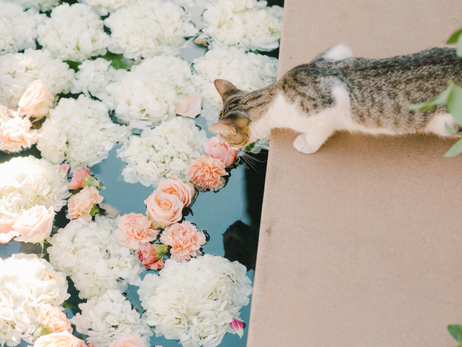 Cat Smelling Roses in Pool