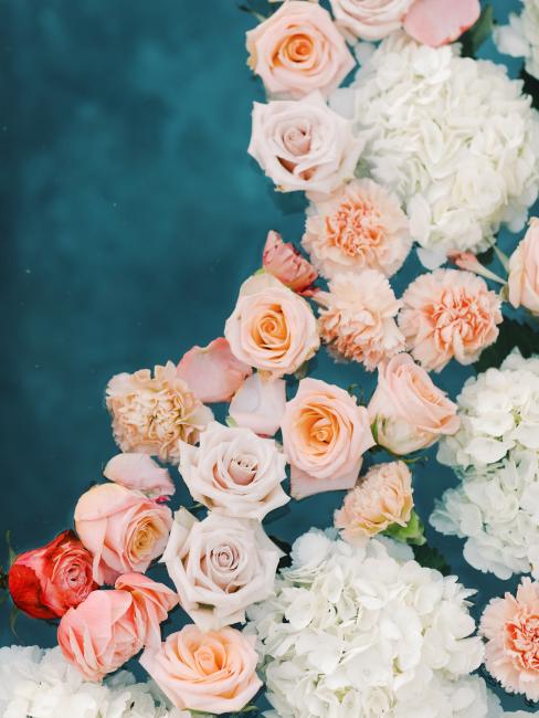 Roses in Pool